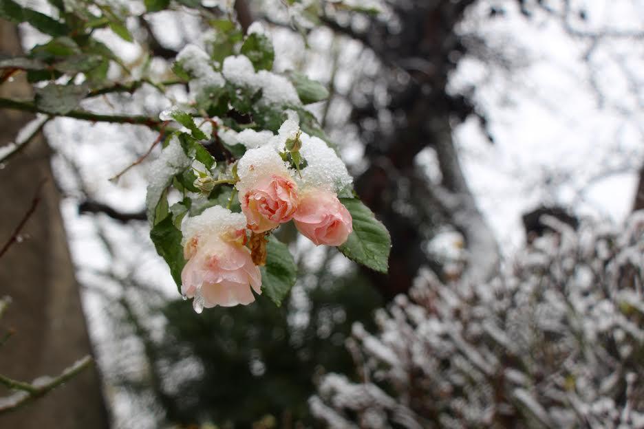 jun pang snow 3.jpg